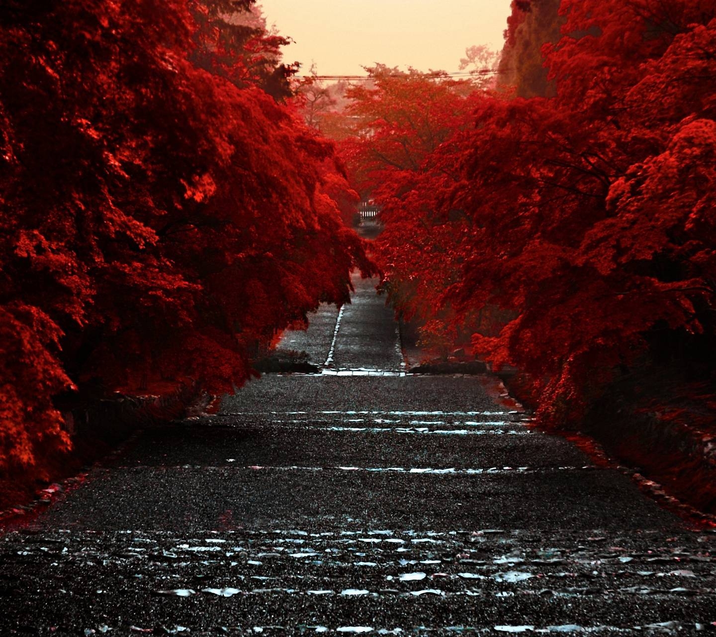 Road Red