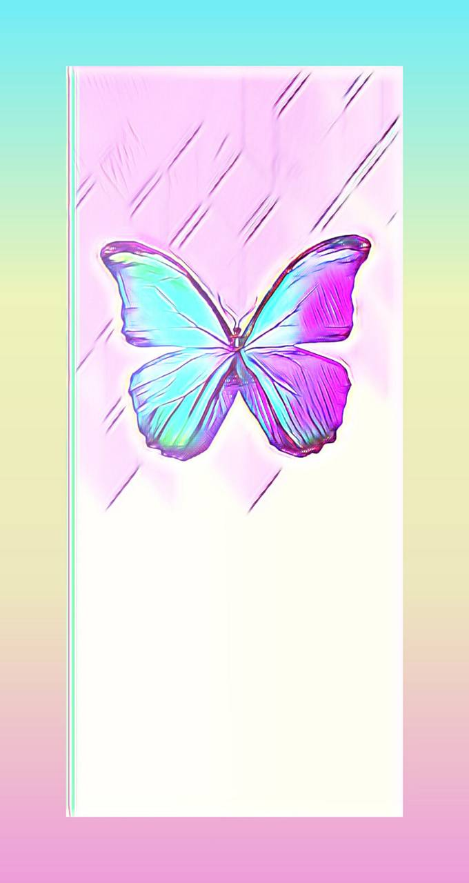 Butterfly colorful