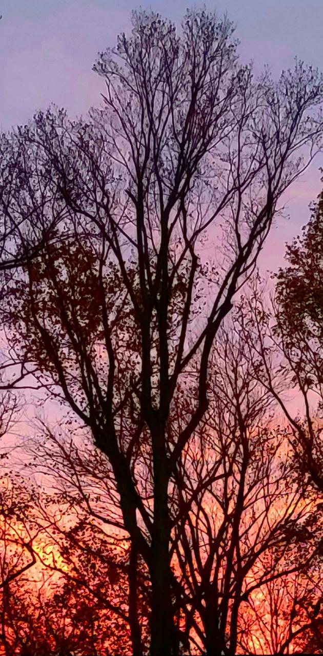 Vivid Sunset trees