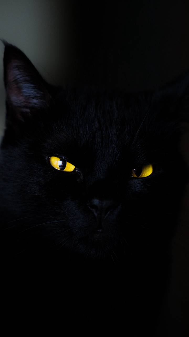 Dark Cat Wallpaper By Mvlntsc 5c Free On Zedge