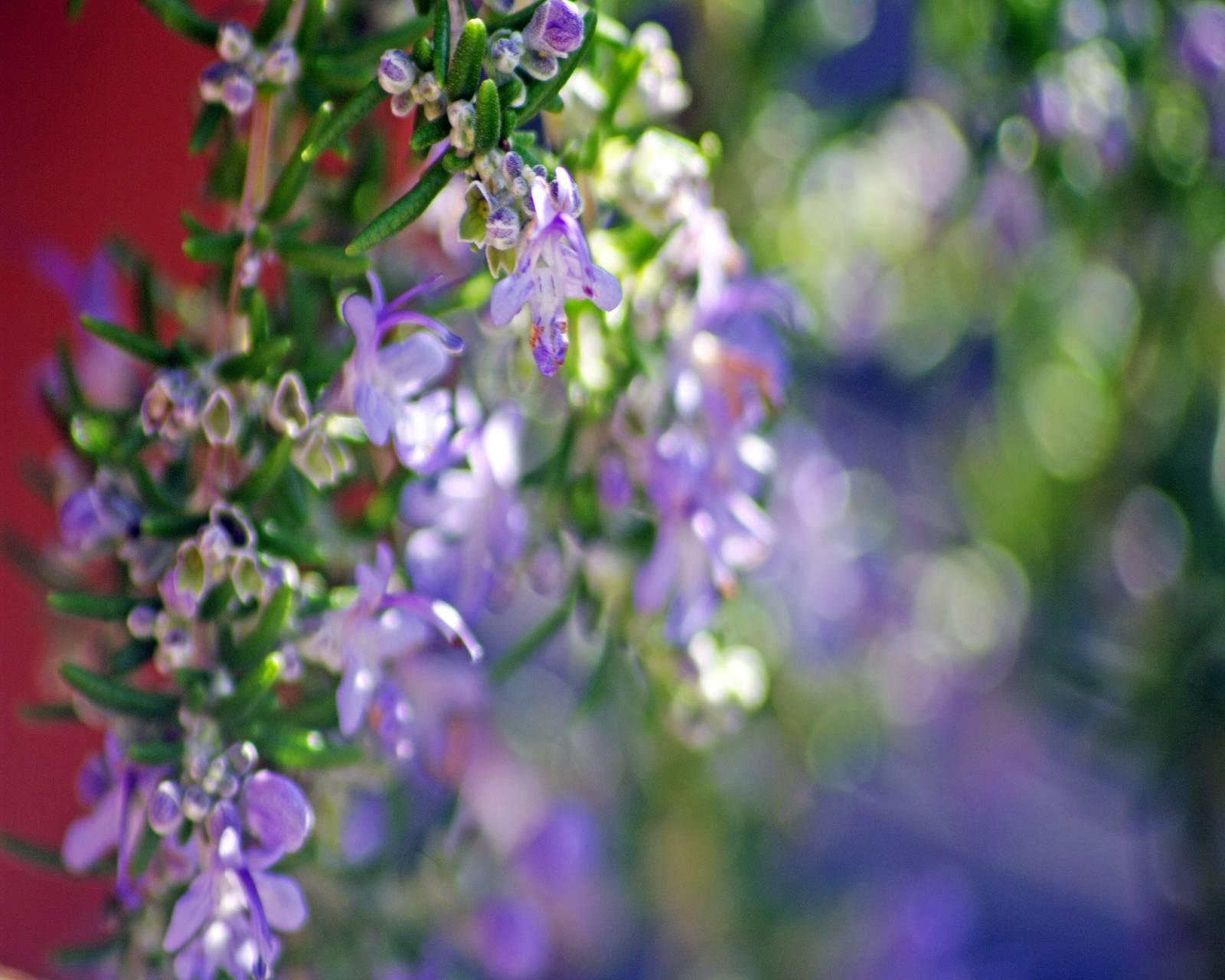 Flower Bokeh Hd