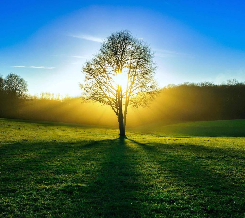 Sun Grass view