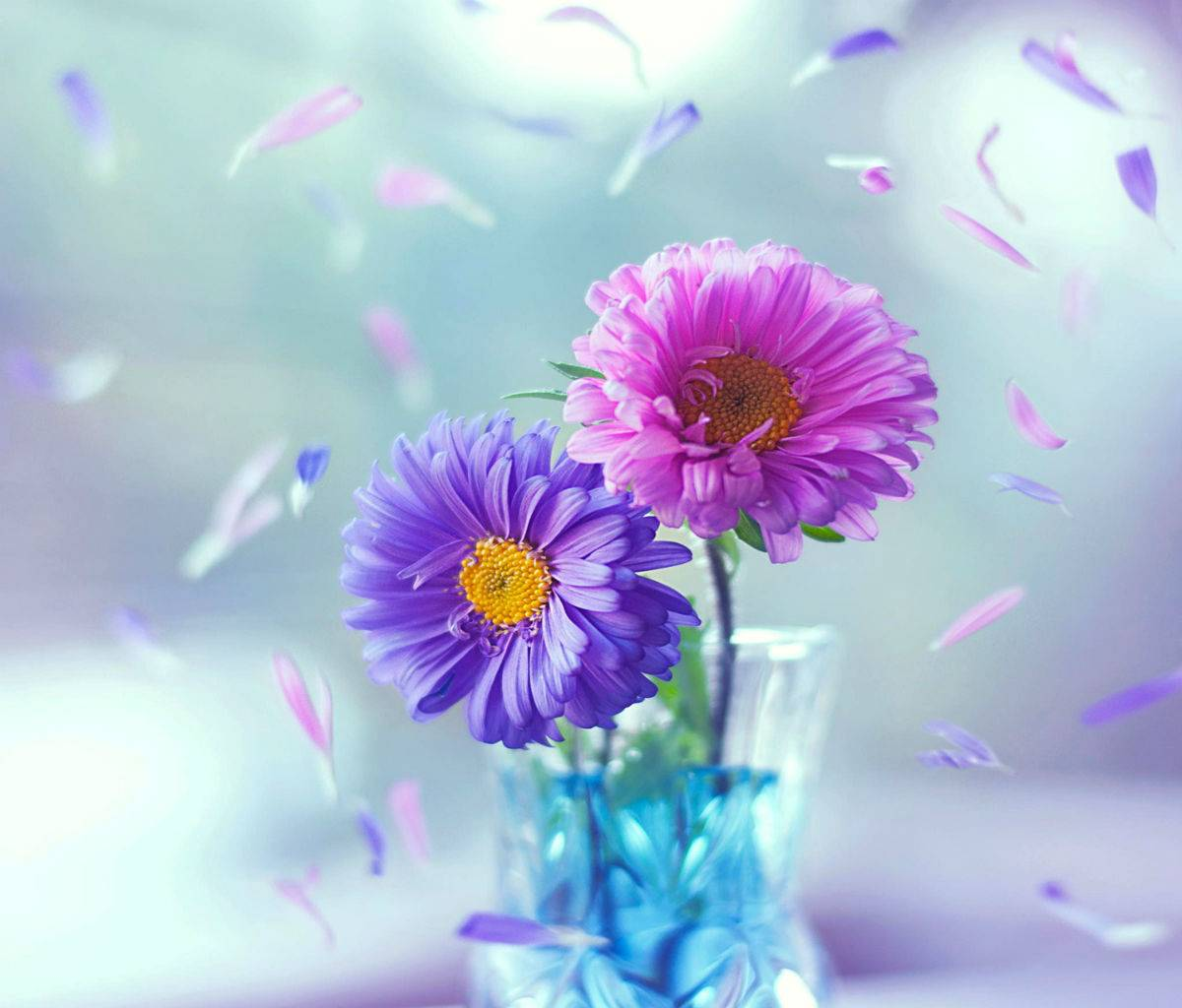 Colorful Flowers HD