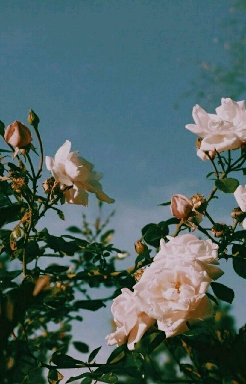flowers idk