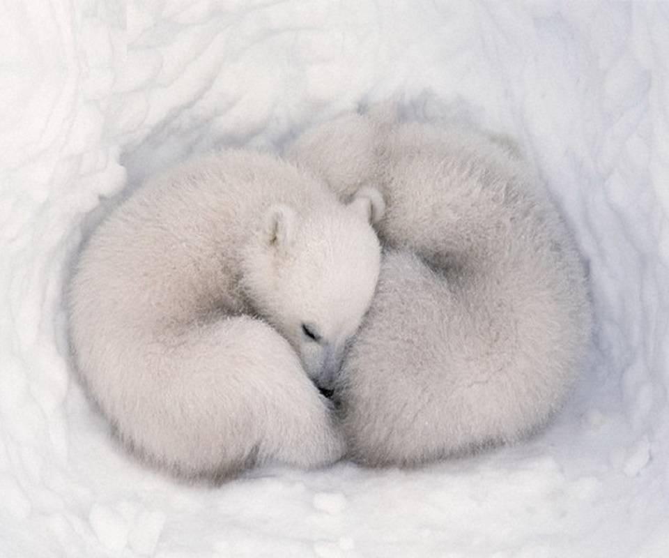 Polar Yin and Yang