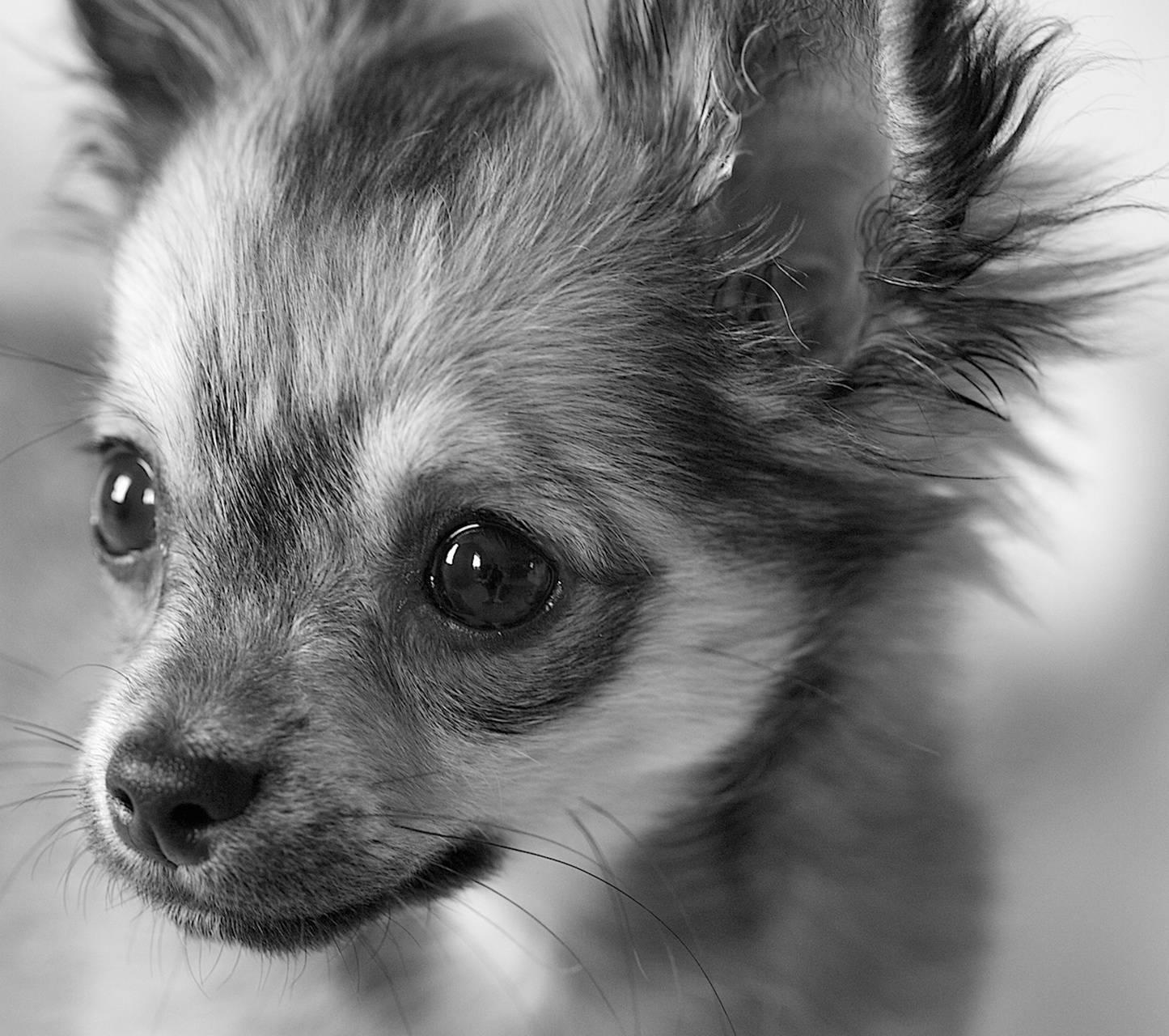 Puppy Cute 6