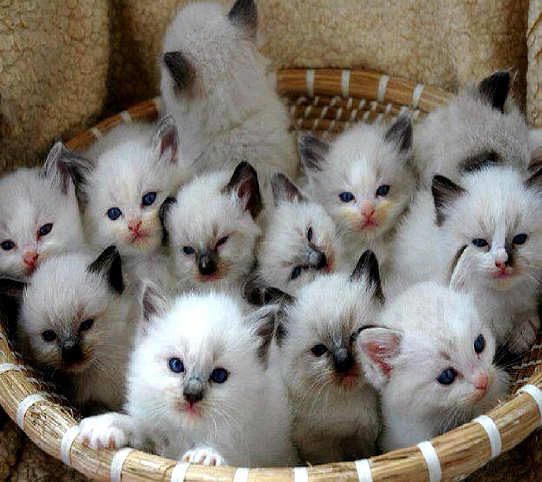 Красивые кошечки, картинки очень смешные много