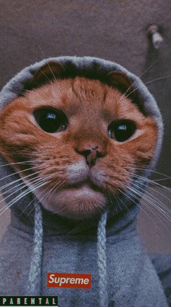 Cat supreme