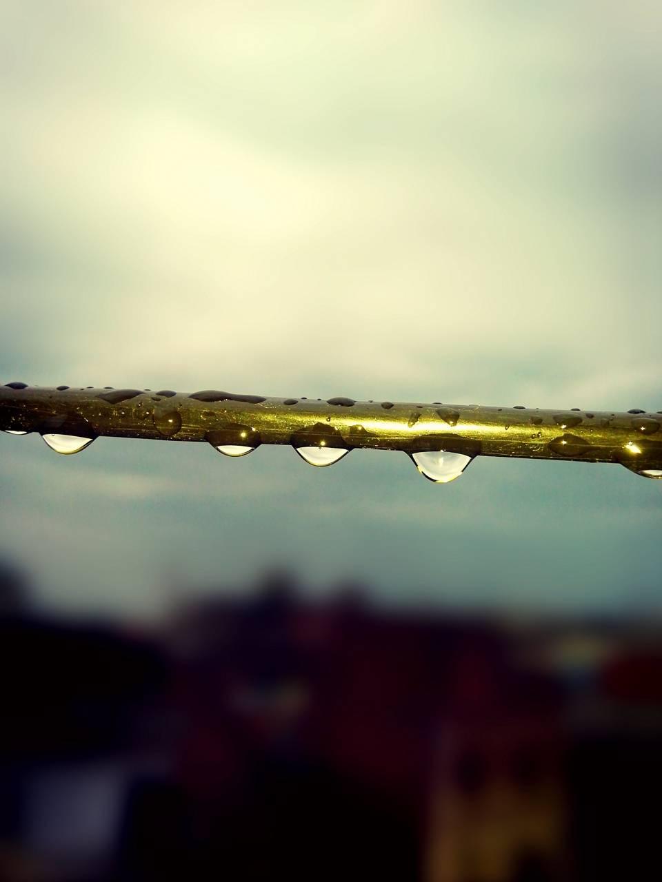 Morning After rain