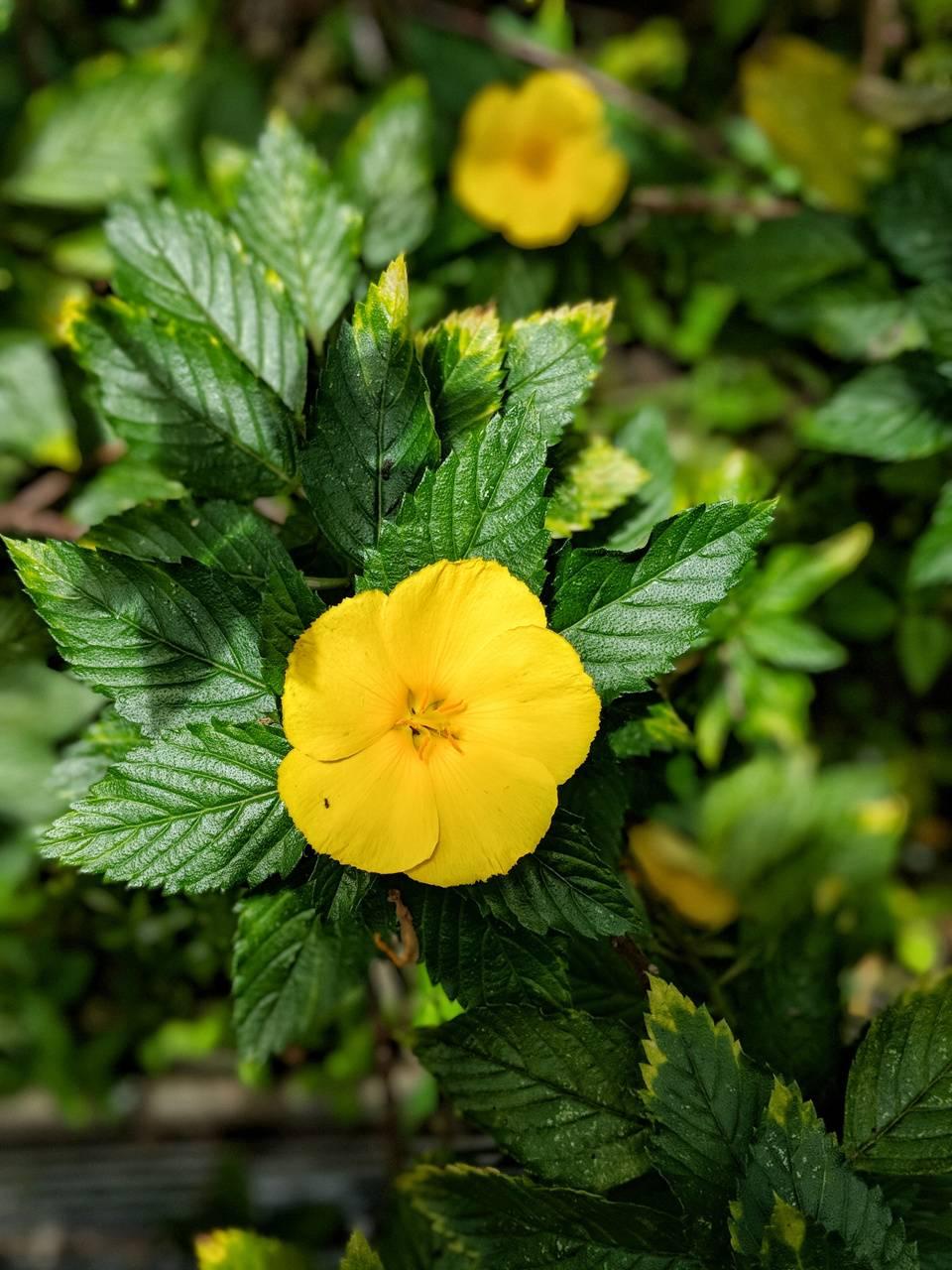 Pop flower