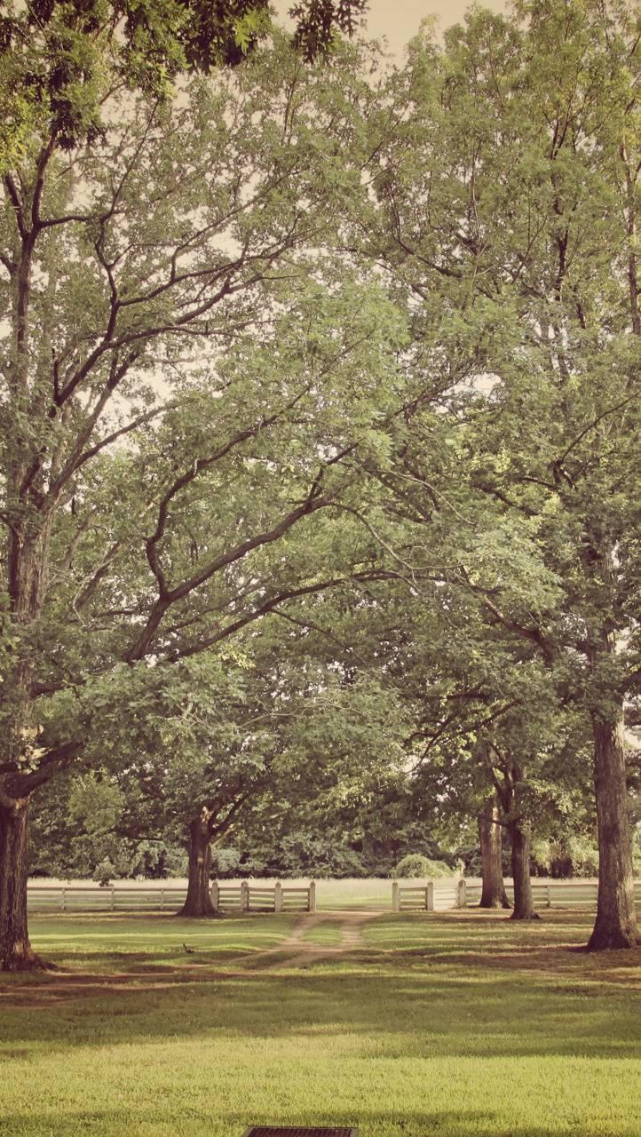 Shaded Meadow