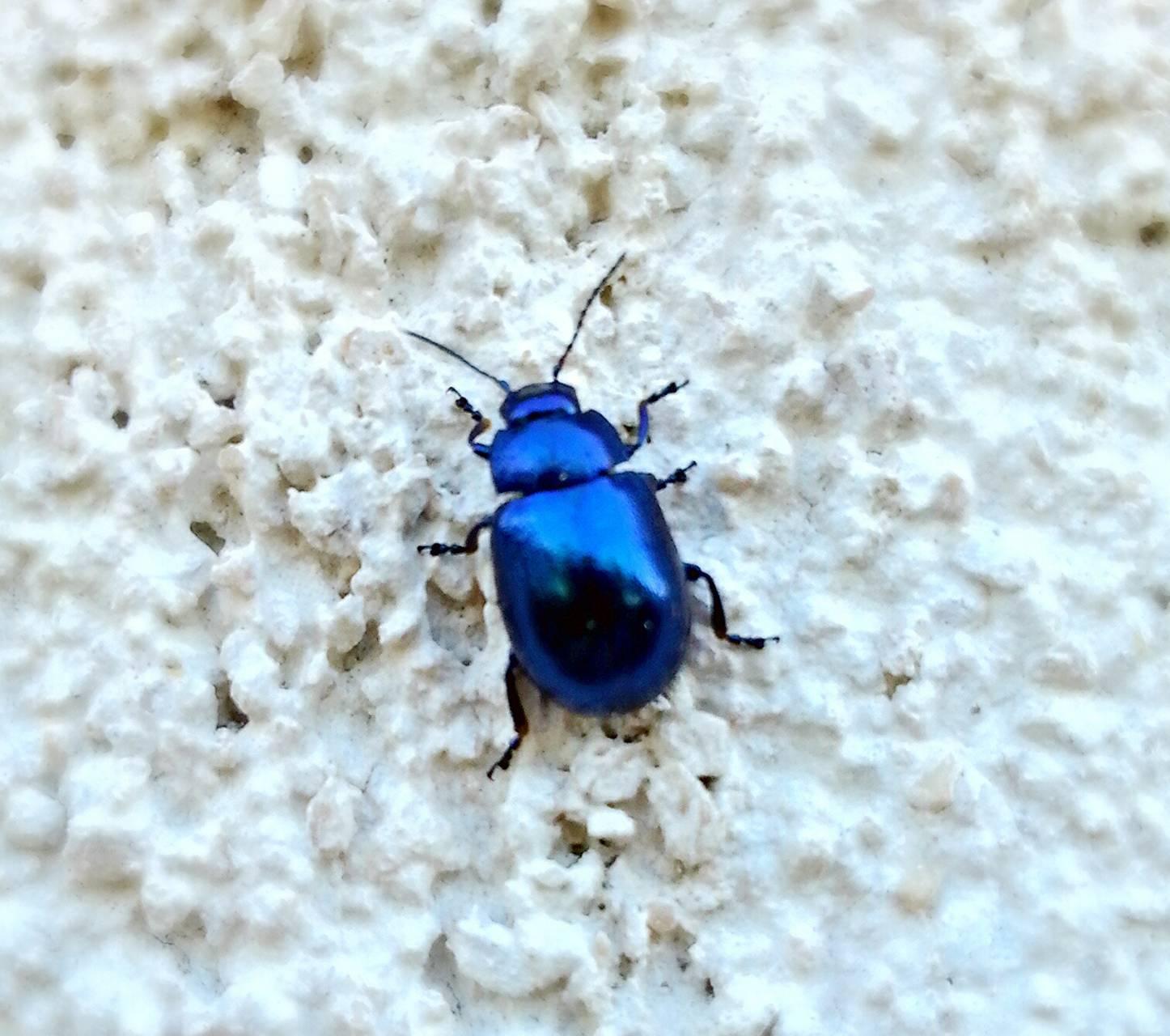 картинка синего жука популярных фильмов