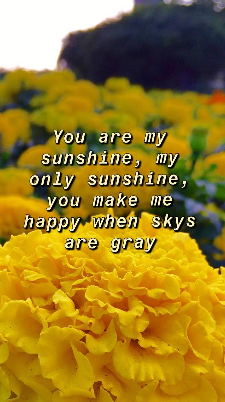 You Are My Sunshine Wallpaper By Soulfirebird 9b Free On Zedge