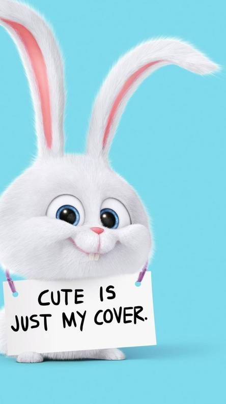 pets-rabbit