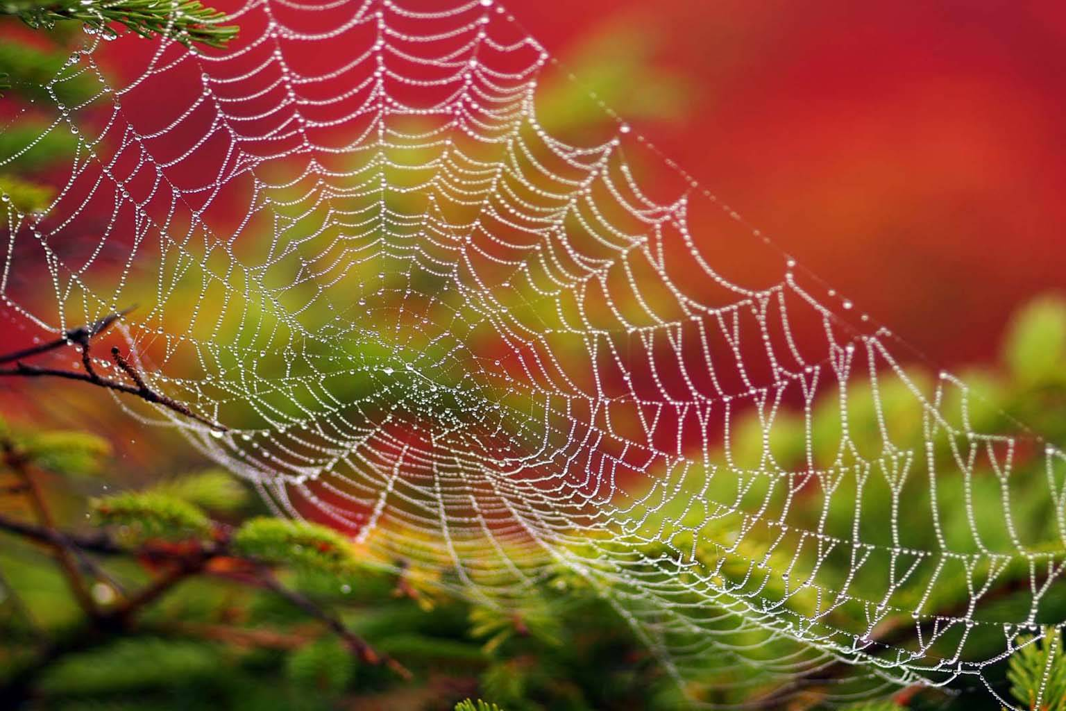 Spider Web Closeup
