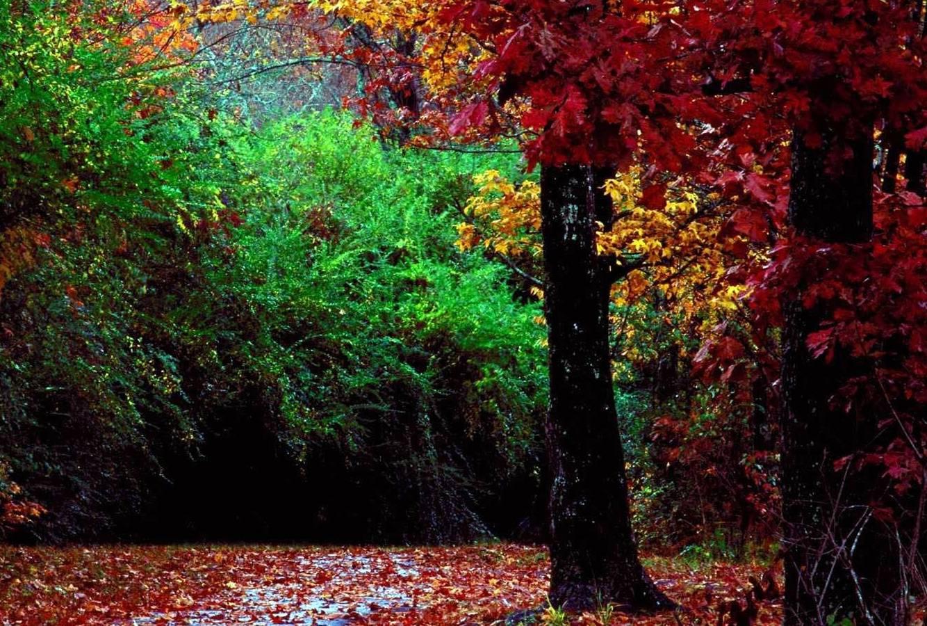 Camino Colorido