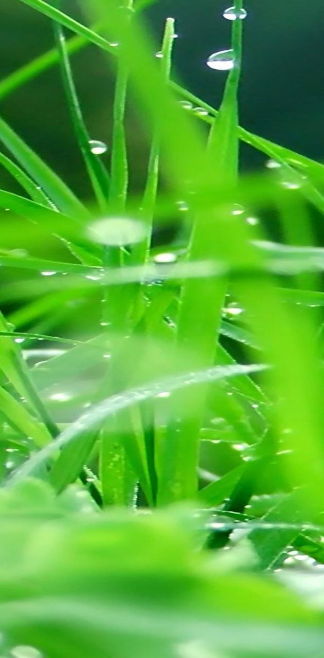 Galaxy S3 Plants