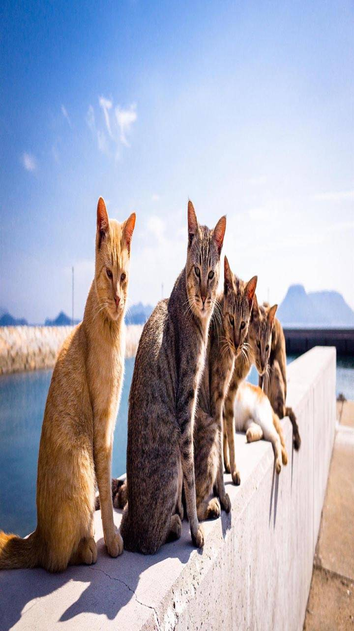 Summer cats