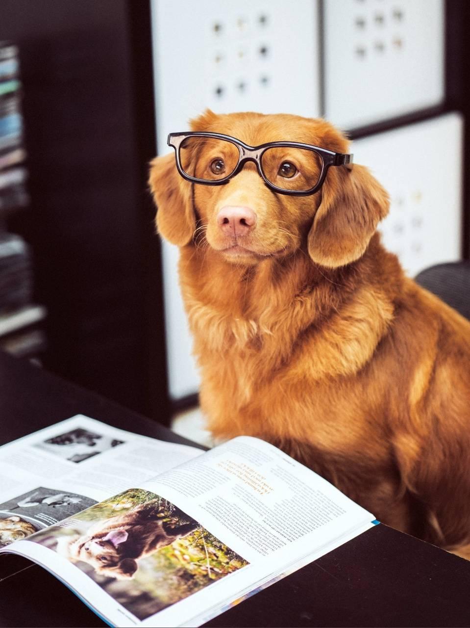 Talent dog
