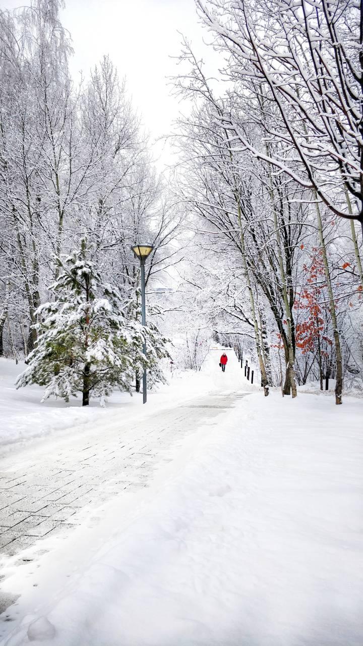 Walker in the snow
