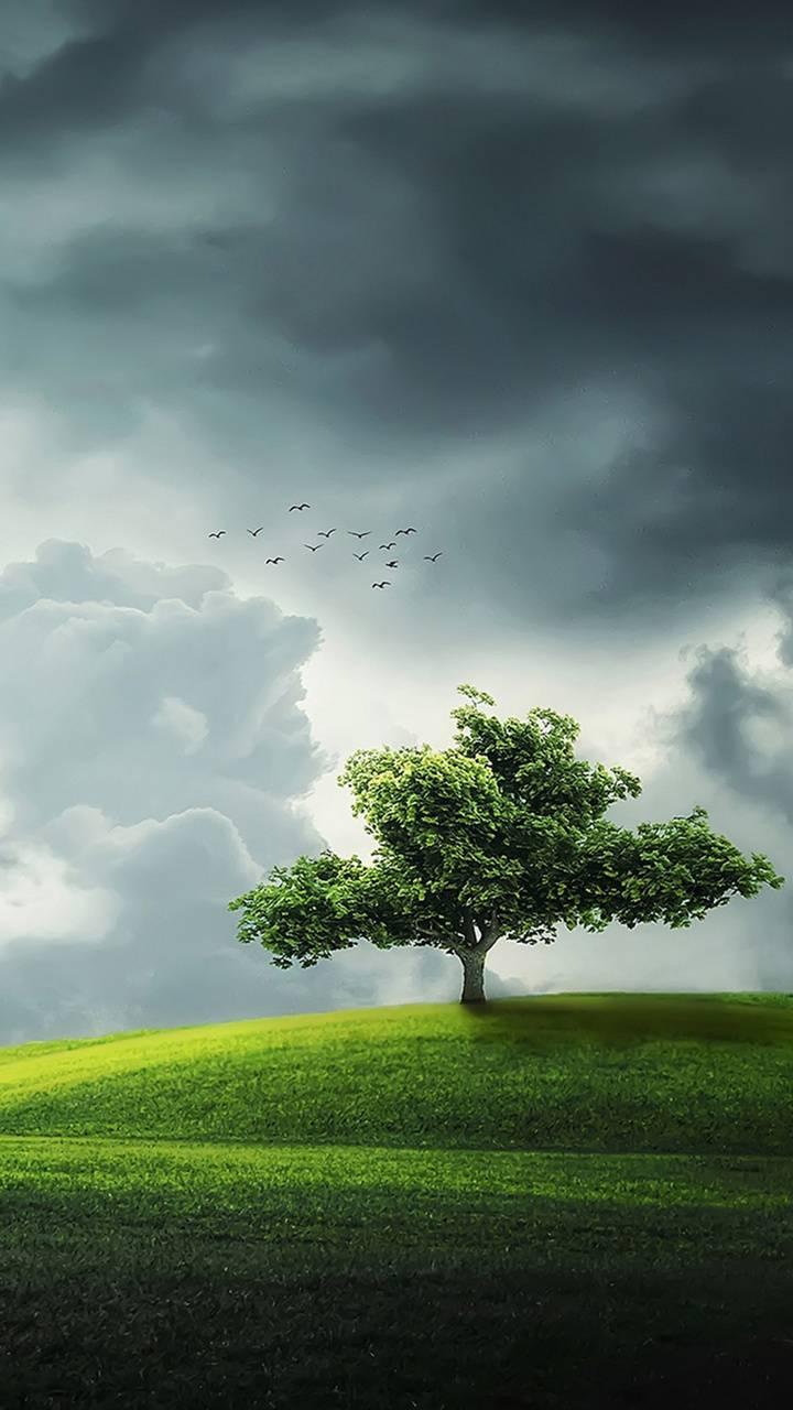 Tree SummerBeautiful