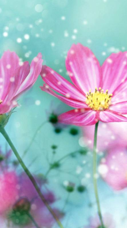 Pink cute wallpapers free by zedge cute pink flowers mightylinksfo