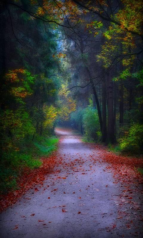 Mist Road