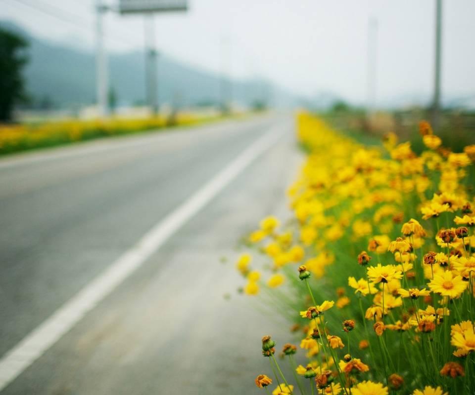 Yellow Flowers Road