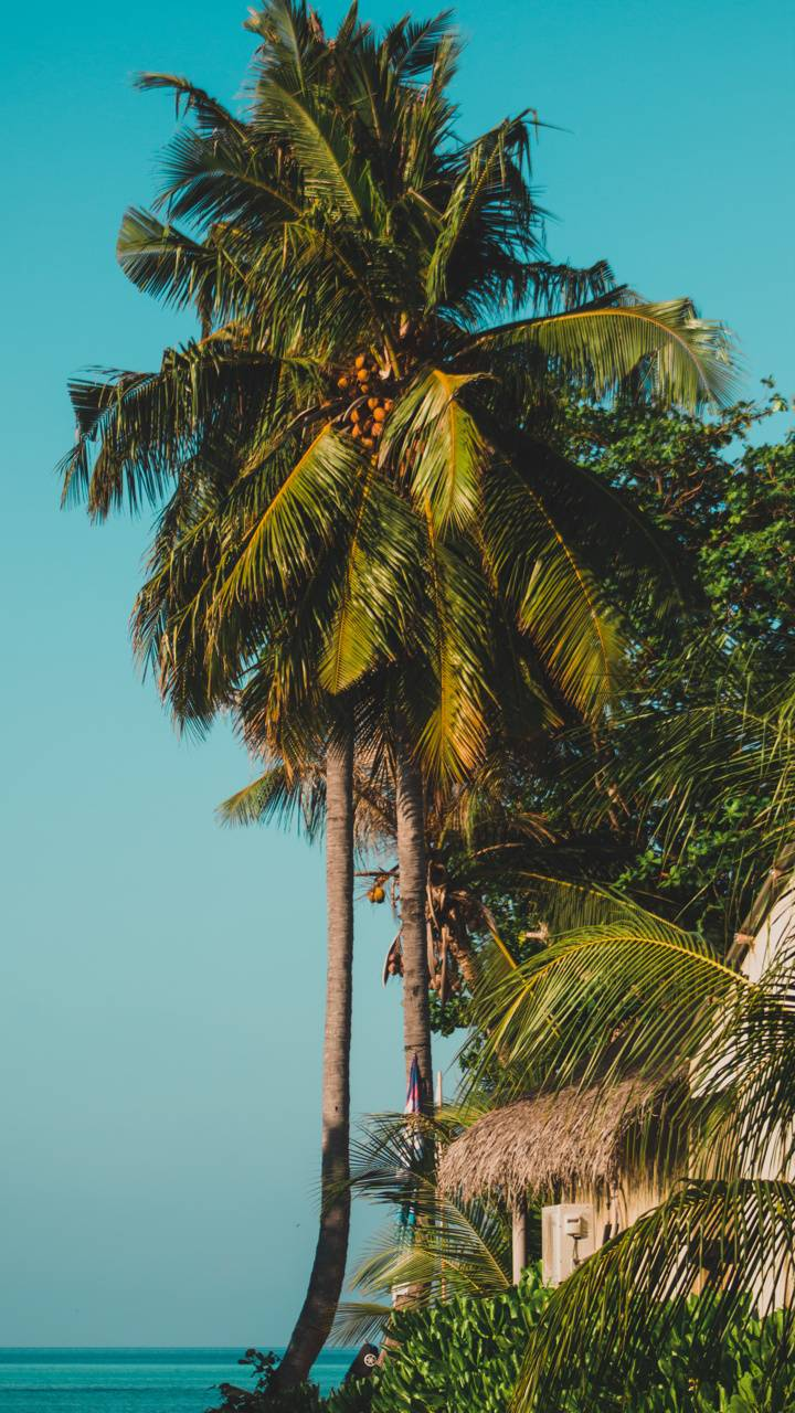 Tropical Fehendhoo