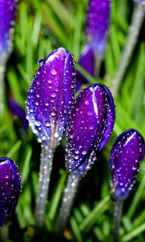 rainy buds