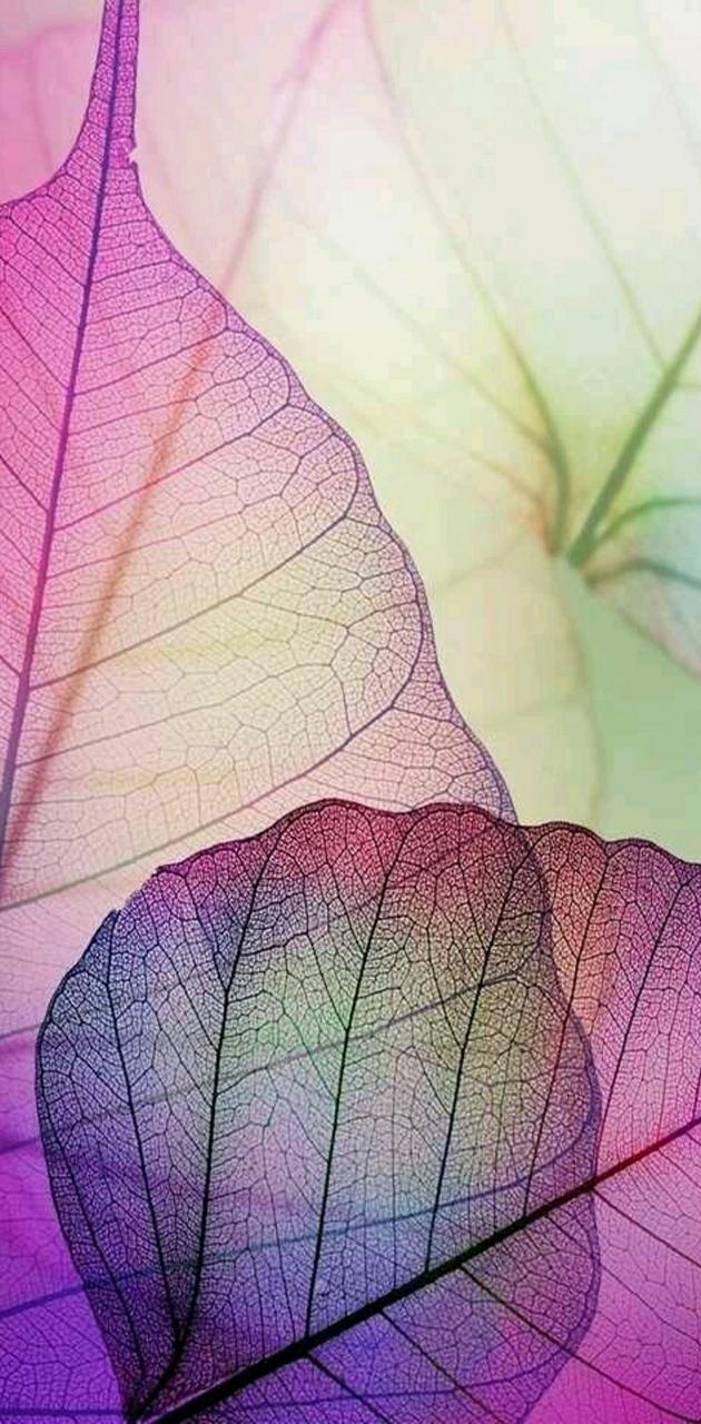 Apple iPhone 6 leaf