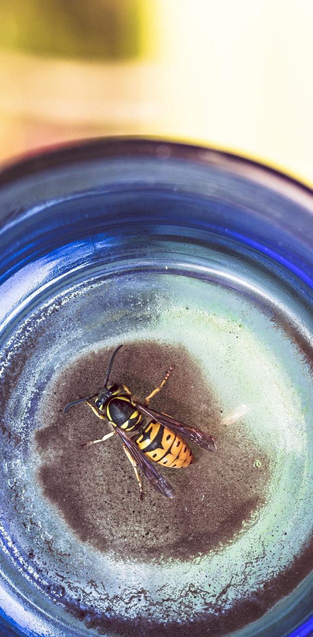Bee In A Bottle