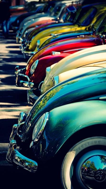 Old beetles