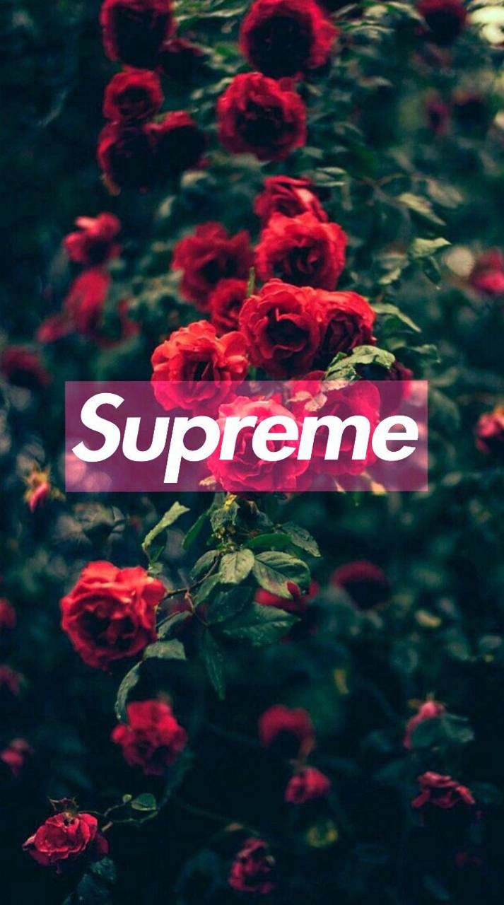 Rose Supreme Wallpaper By Jone676 06 Free On Zedge
