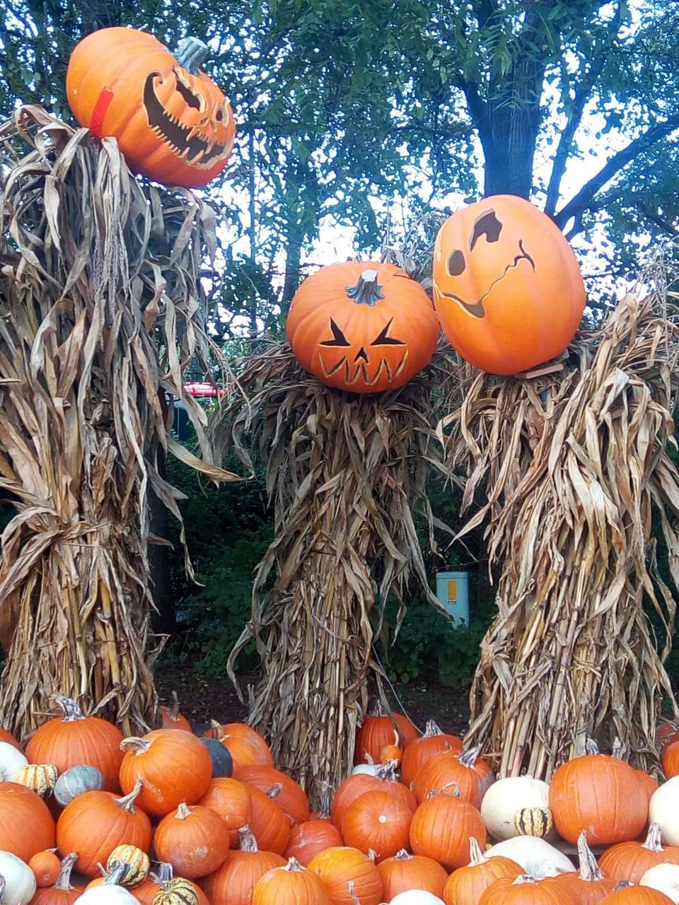 Pumpkin Gathering