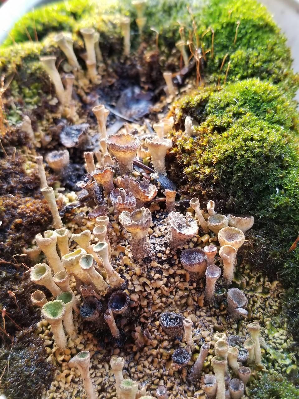 Syfy moss