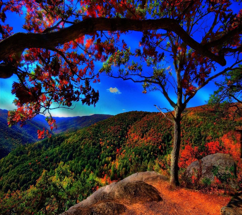Hd Nature Scene