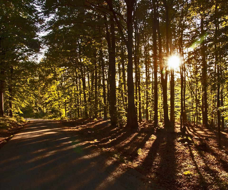 Sun Behind Trees