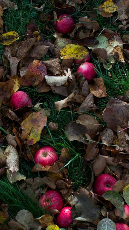 Leaves And Apples
