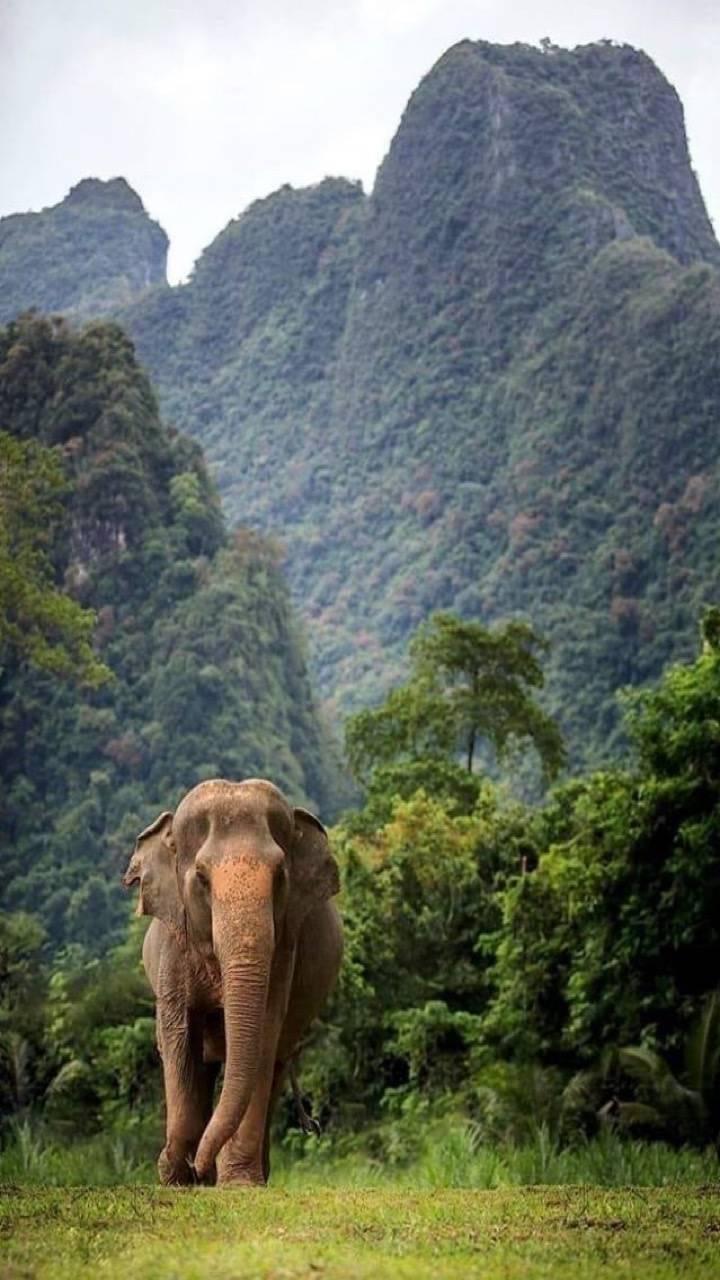 India Elephant Wallpaper By Tubar B4 Free On Zedge