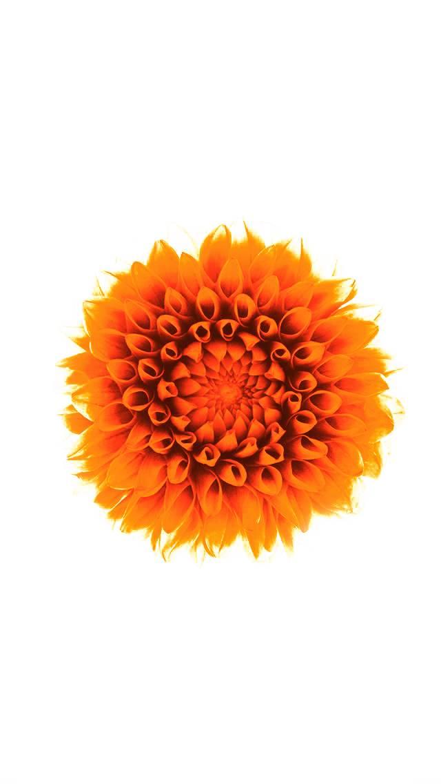 iphone orange Lotus