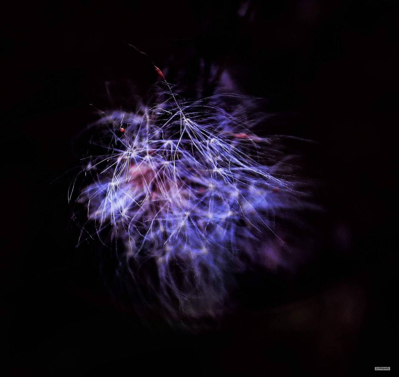 Purple fluff