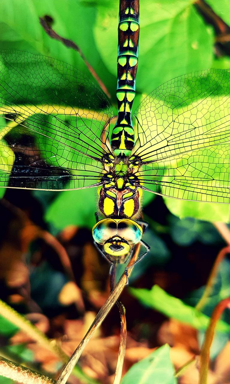 eoS dragon fly