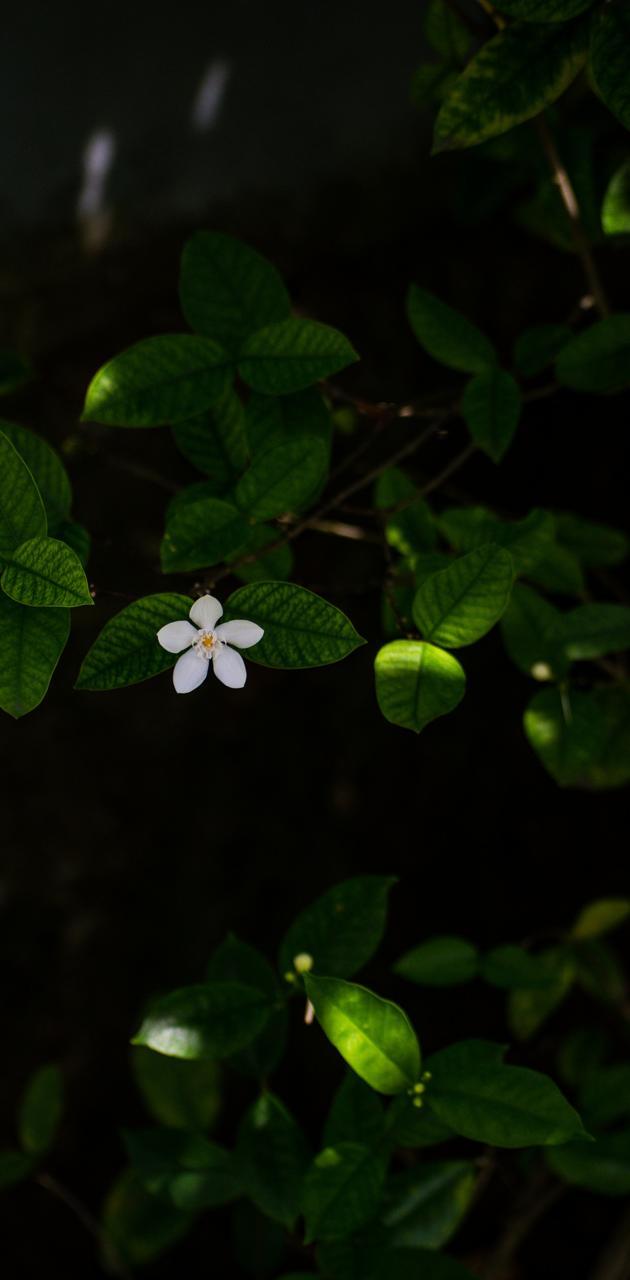 Nature- Flower