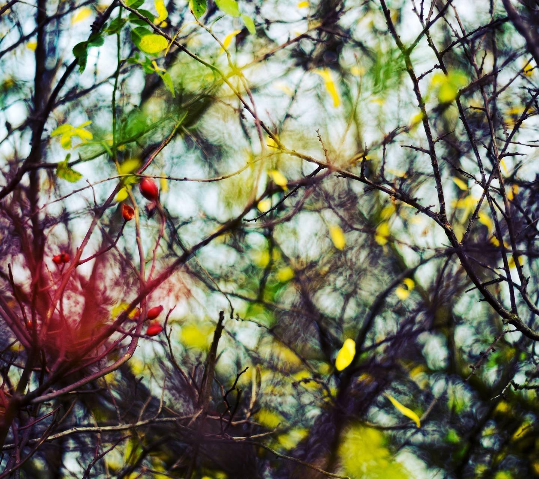 Autumn leafs 3