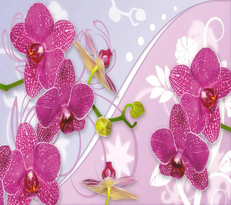 Flowers Wallpaper Zedge - GAMBAR BUNGA