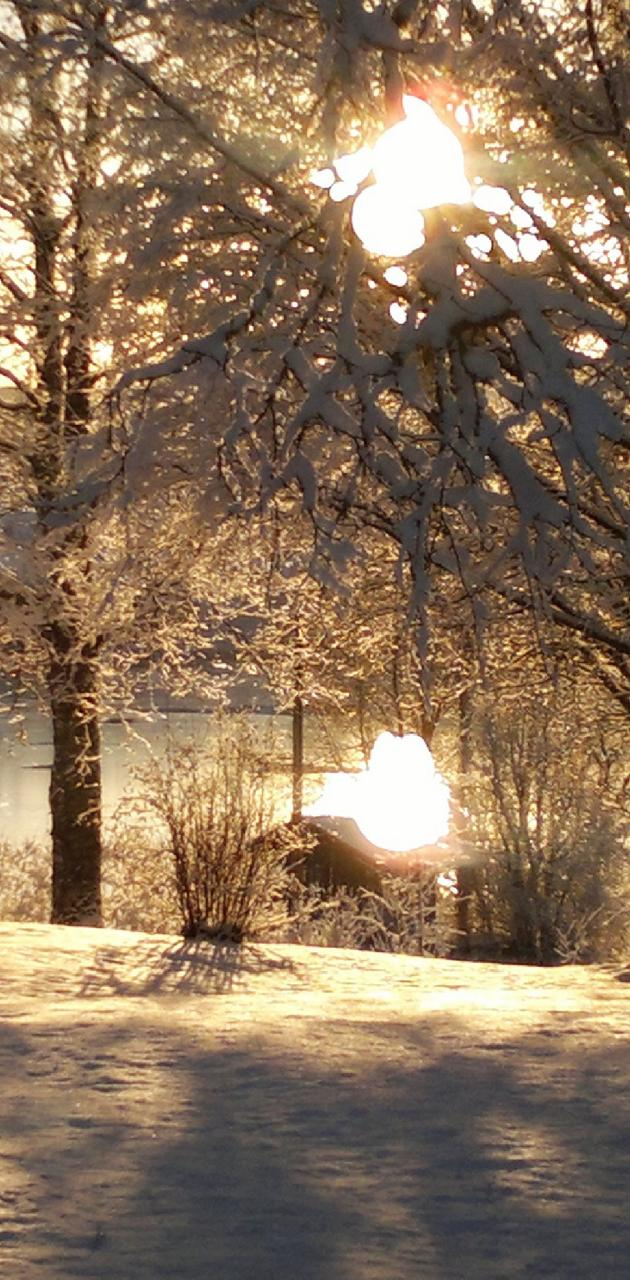 Winter Scene 17