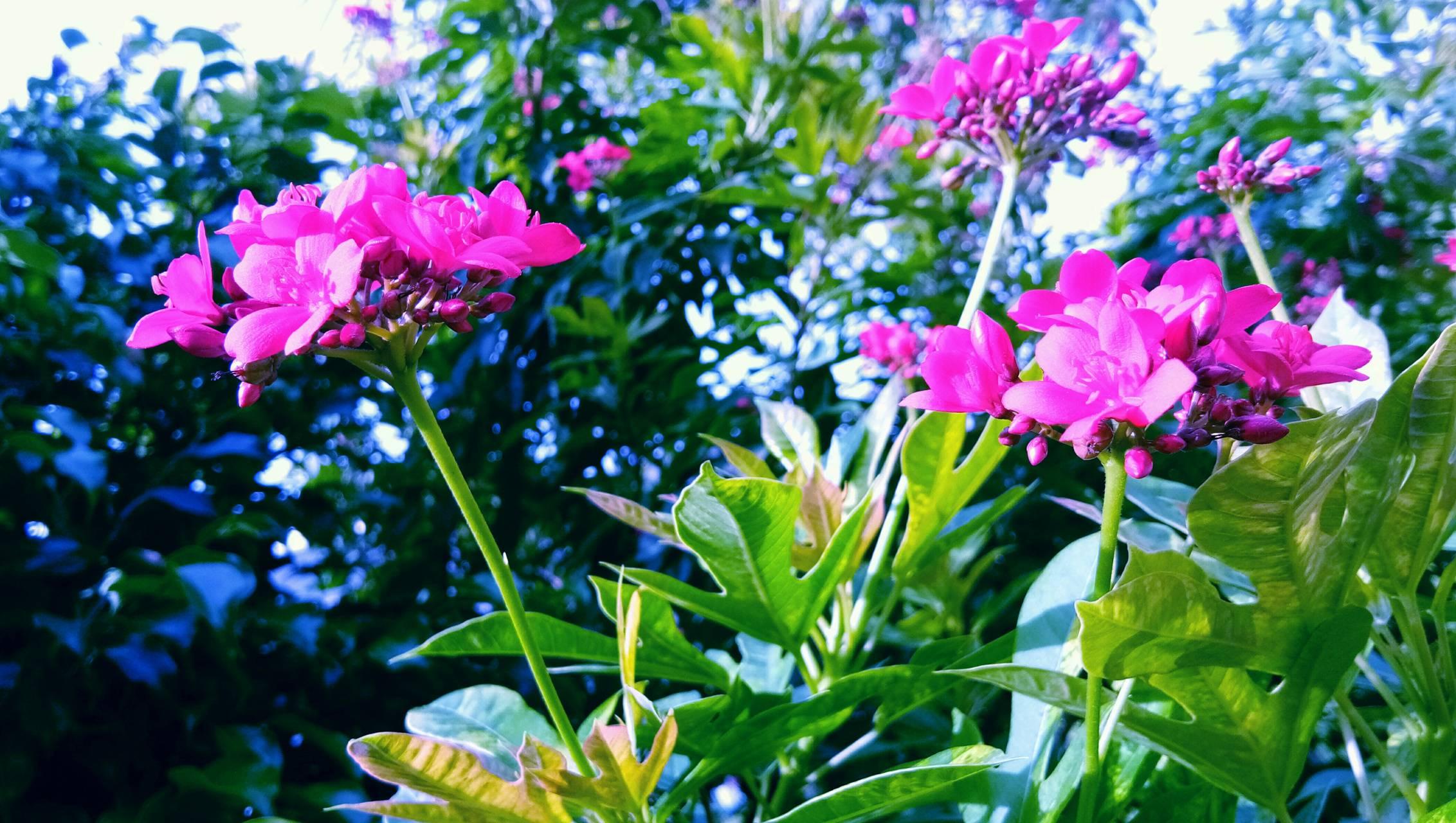 Pink flower BY MNM