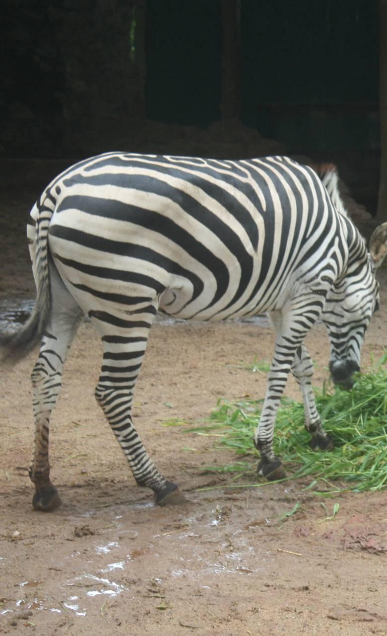 Colombo Zoo1