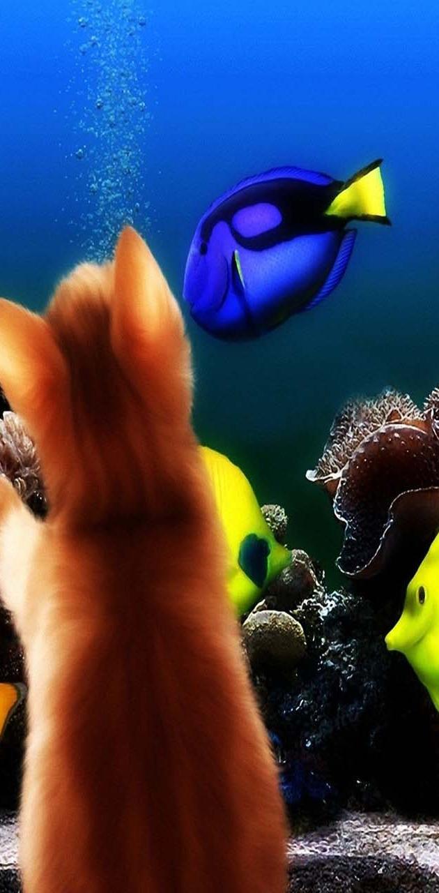 Kitten Fishes Aqurm